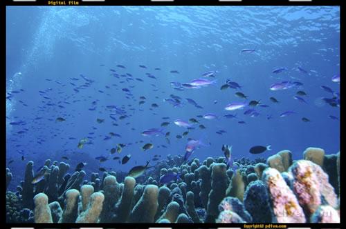 マーシャル諸島 ノックス環礁 ダイビング 2005/08/15 (1)ノース