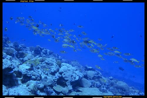 マーシャル諸島 ノックス環礁 ダイビング 2005/08/15 (2)ノックス海峡