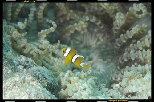 マーシャル諸島 マジュロ環礁 ダイビング 2005/08/16 (1)タカズコーラルガーデン