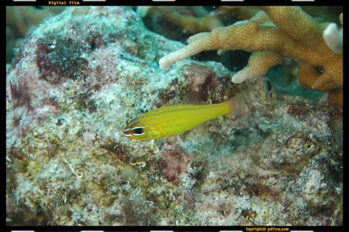 マーシャル諸島 マジュロ環礁 ダイビング 2005/08/16 (2)セレンディパーアイランド前