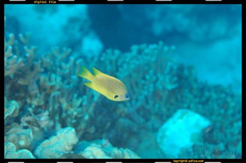 マーシャル諸島 マジュロ環礁 ダイビング 2005/08/17 (3)No.2