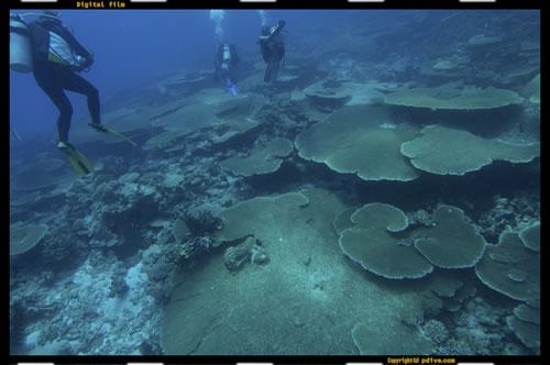 マーシャル諸島 マジュロ環礁 ダイビング 2005/08/18 (1)エターナルエデン