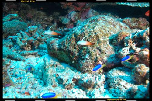 マーシャル諸島 マジュロ環礁 ダイビング 2005/08/18 (2)アクアリウム(アクアリューム)