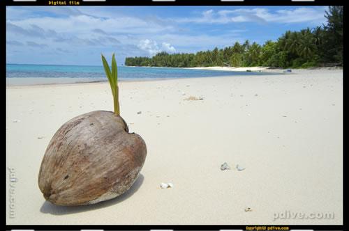 マーシャル諸島 マジュロ環礁 2005/08/18 陸上撮影(カロリン島)