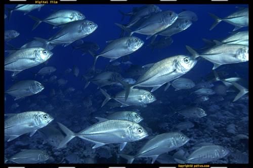マーシャル諸島 アルノ環礁 ダイビング 2005/08/19 (1)イリアム
