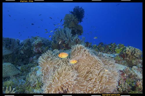 マーシャル諸島 アルノ環礁 ダイビング 2005/08/19 (2)アルノアルノ