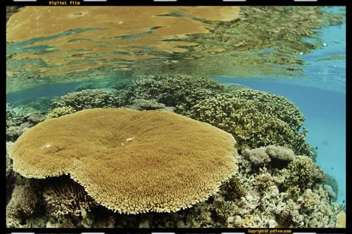 マーシャル諸島 マジュロ環礁 ダイビング 2005/08/20 (1)No.2(2)アクアリウム(3)タカズ・コーラルガーデン