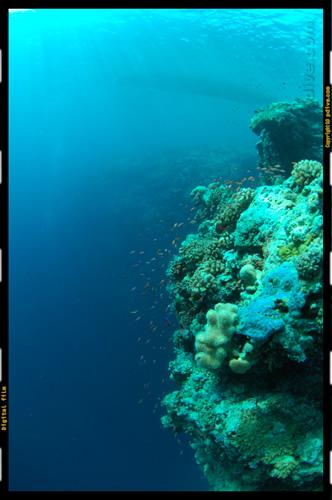 パラオ ダイビング 2007/02/10 (3)シアスコーナー