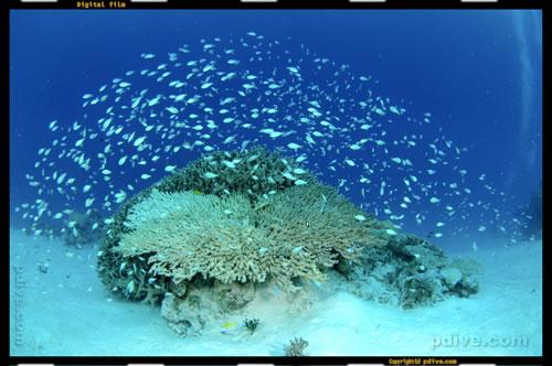 マーシャル諸島 アルノ環礁 ダイビング 2006/08/13 (1)Jilang