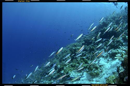 マーシャル諸島 アルノ環礁 ダイビング 2006/08/13 (2)ドードーパス