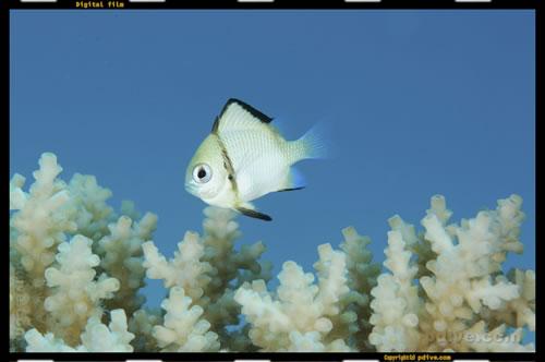 マーシャル諸島 アルノ環礁 ダイビング 2006/08/13 (3)Jobna