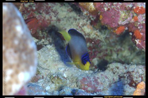 マーシャル諸島 マジュロ環礁 ダイビング 2006/08/14 (1)ダラップ