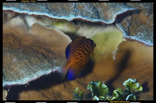 マーシャル諸島 マジュロ環礁 ダイビング 2006/08/14 (2)ブリッジ