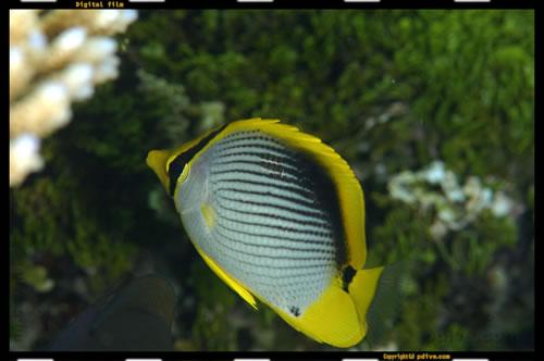 マーシャル諸島 マジュロ環礁 ダイビング 2006/08/15 (1)アジャルタケ・レックリーフ