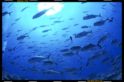 マーシャル諸島 アルノ環礁 ダイビング 2006/08/17 (1)イリアム