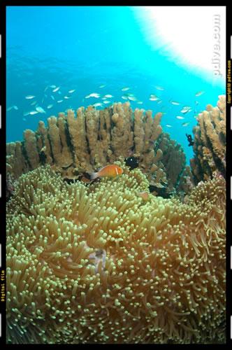 マーシャル諸島 マジュロ環礁 ダイビング 2006/08/17 (3)ボコラップ