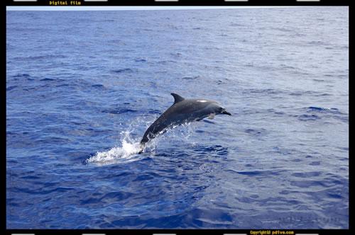 マーシャル諸島 アルノ環礁 2006/08/17 船上撮影