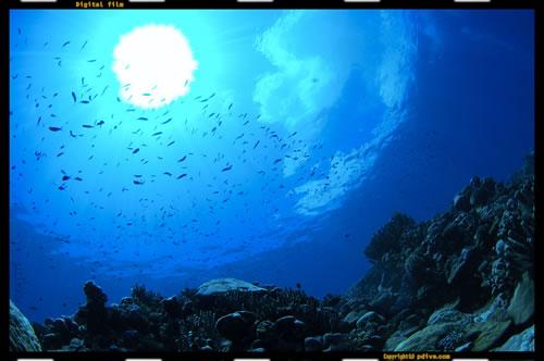 マーシャル諸島 アルノ環礁 ダイビング 2006/08/18 (1)アルノ・ノース