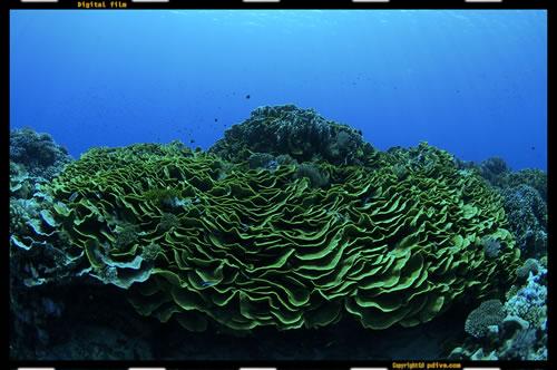 マーシャル諸島 アルノ環礁 ダイビング 2006/08/18 (2)アルノ・ノース