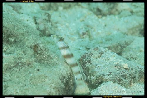 マーシャル諸島 マジュロ環礁 ダイビング 2006/08/18 (3)RRE前ビーチ
