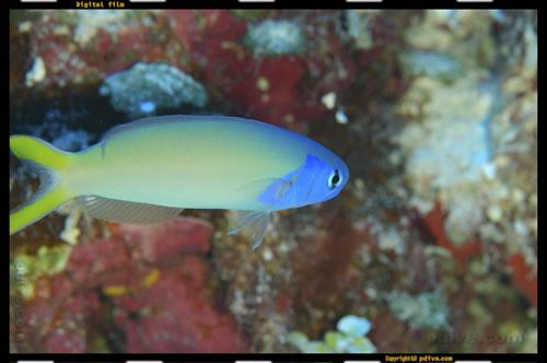 マーシャル諸島 マジュロ環礁 ダイビング 2006/08/19 (1)カロリンパス