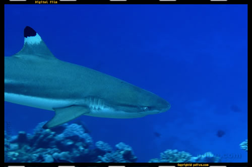 マーシャル諸島 マジュロ環礁 ダイビング 2006/08/19 (2)アクアリウム