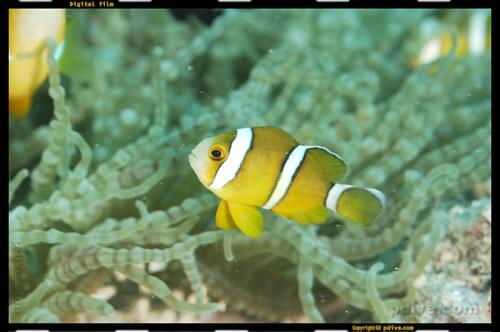 マーシャル諸島 マジュロ環礁 ダイビング 2006/08/19 (3)ボコラップ