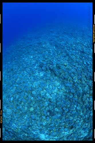 マーシャル諸島 ミリ環礁 ダイビング 2006/10/10 (3)Northeast pass