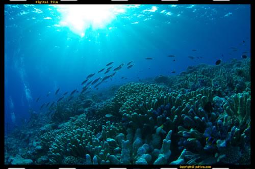 マーシャル諸島 ミリ環礁 ダイビング 2006/10/11 (4)Medke reef
