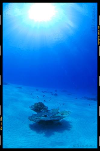 マーシャル諸島 アルノ環礁 ダイビング 2006/10/12 (2)アルノアルノ