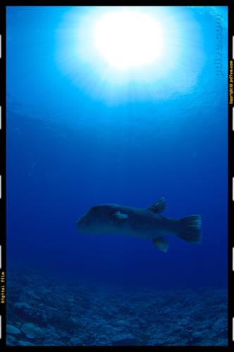 マーシャル諸島 アルノ環礁 ダイビング 2006/10/12 (3)アルノ イリアム