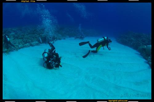 マーシャル諸島 アルノ環礁 ダイビング 2006/10/12 (4)アルノ アルノノース