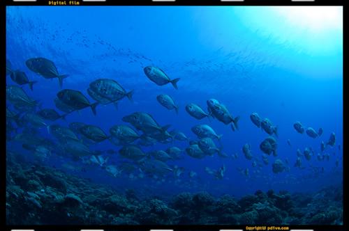 マーシャル諸島 マジュロ環礁 ダイビング 2006/10/13 (1)アクアリウムインサイド