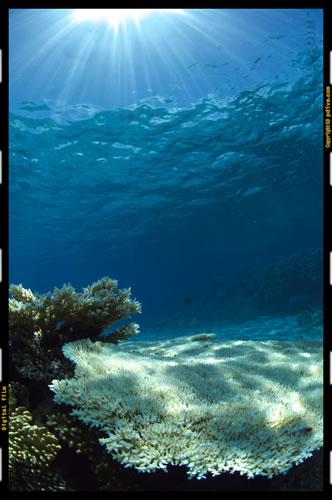 マーシャル諸島 マジュロ環礁 ダイビング 2006/10/13 (2)No.2