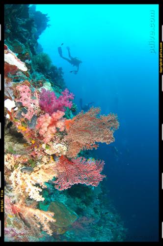 パラオ ダイビング 2007/02/11 (3)ファーンウォール