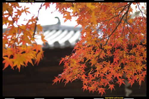 奈良撮影旅行 2006/11/25 世界遺産「東大寺 二月堂」,「手向山八幡宮」